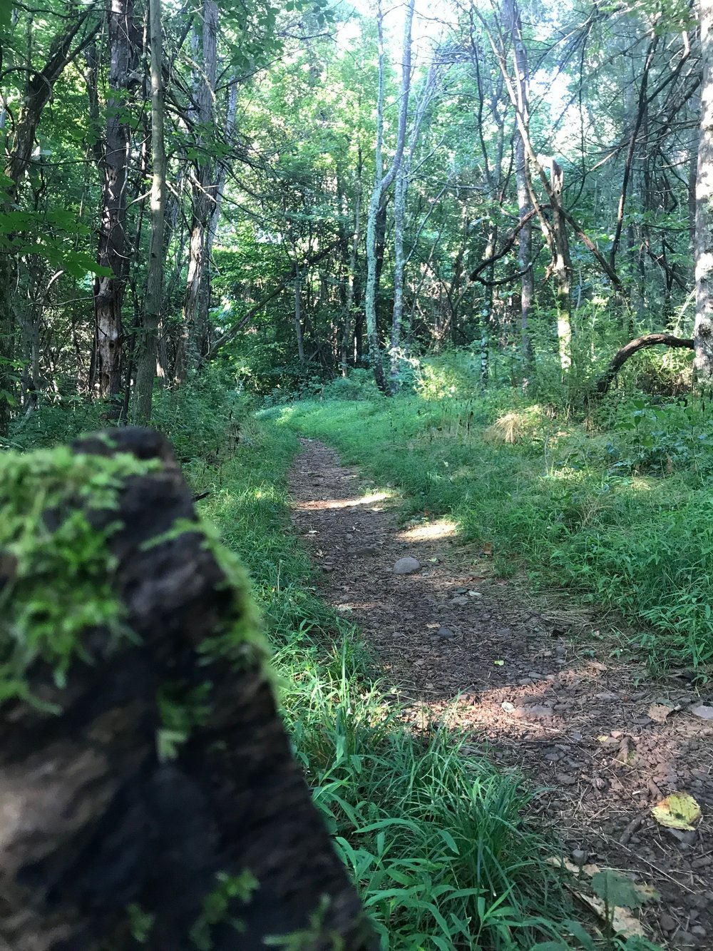 Dickey Ridge Shenandoah 4