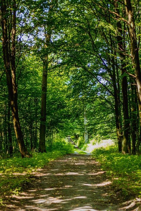 forest-1532448_960_720.jpg