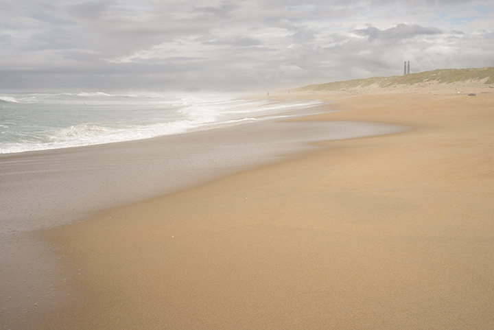 Celia Lara_Salinas River St Beach.jpeg