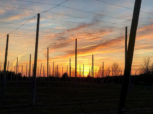 Took a moment to pause on our walk home from the Brewery tonight and wanted to share our view with you.  From our farm to your glass. Cheers! 🍻