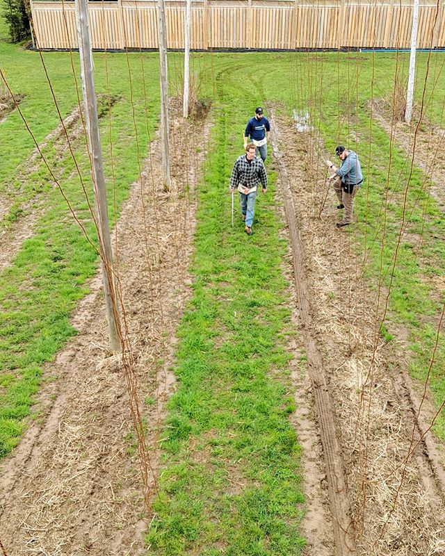 We're out here working in the field today getting the hops ready for the season! The tap room is open 12-9 today if you're feeling thirsty ☺️