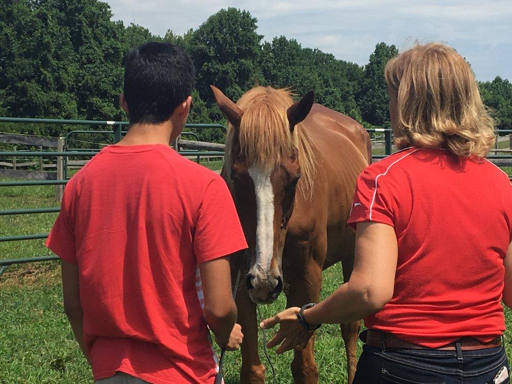 Galvin Horse Farm