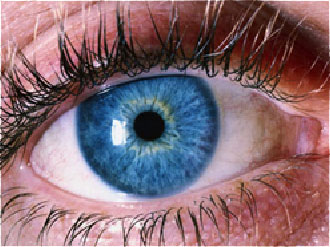 Iris Reading only   25 minutes       $25