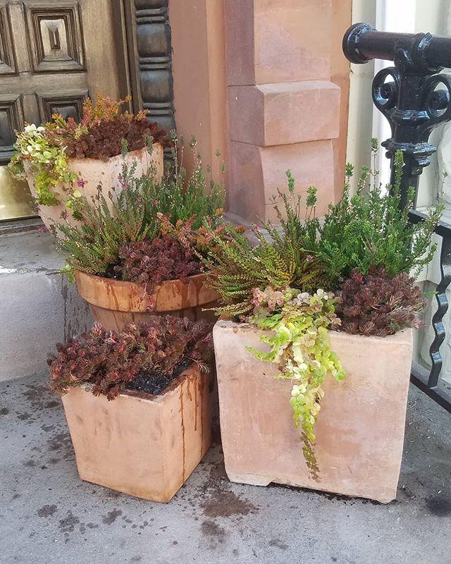 Park Slope Stoop Winter Planting