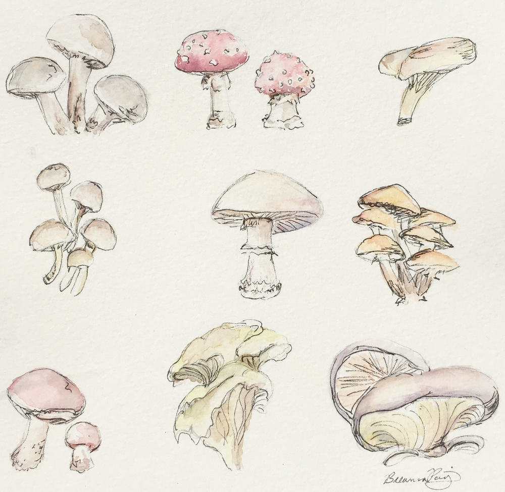 Mushroom Study,  Watercolor and Ballpoint Pen, 8 x 8 in, 2016.