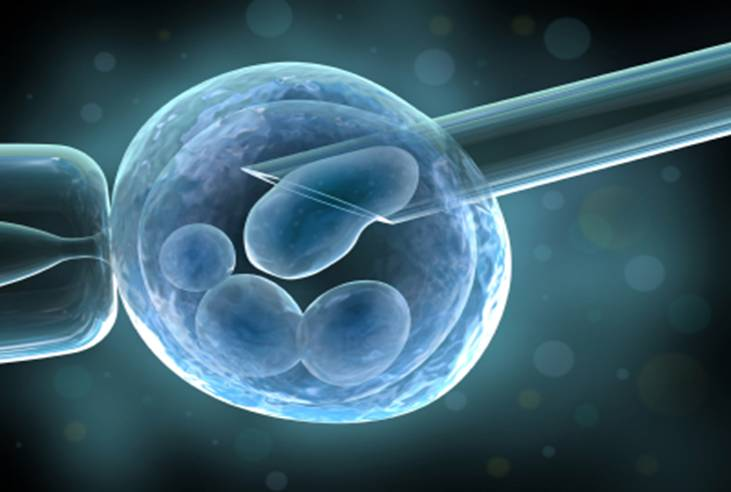 embryo-research-abortsa-com.jpg