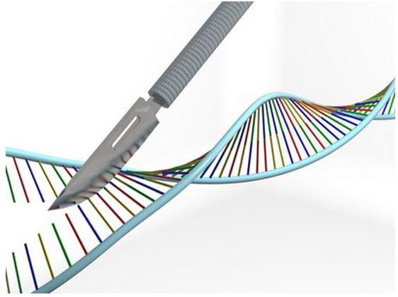 genetic-editing-embryos.jpg