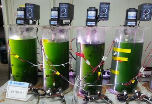 algae+(1)+injection.jpeg
