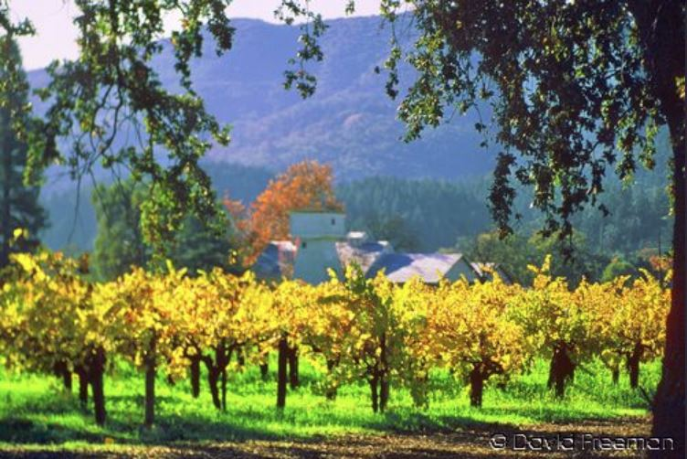 Autumn in Wine Country 12 x 8.JPG