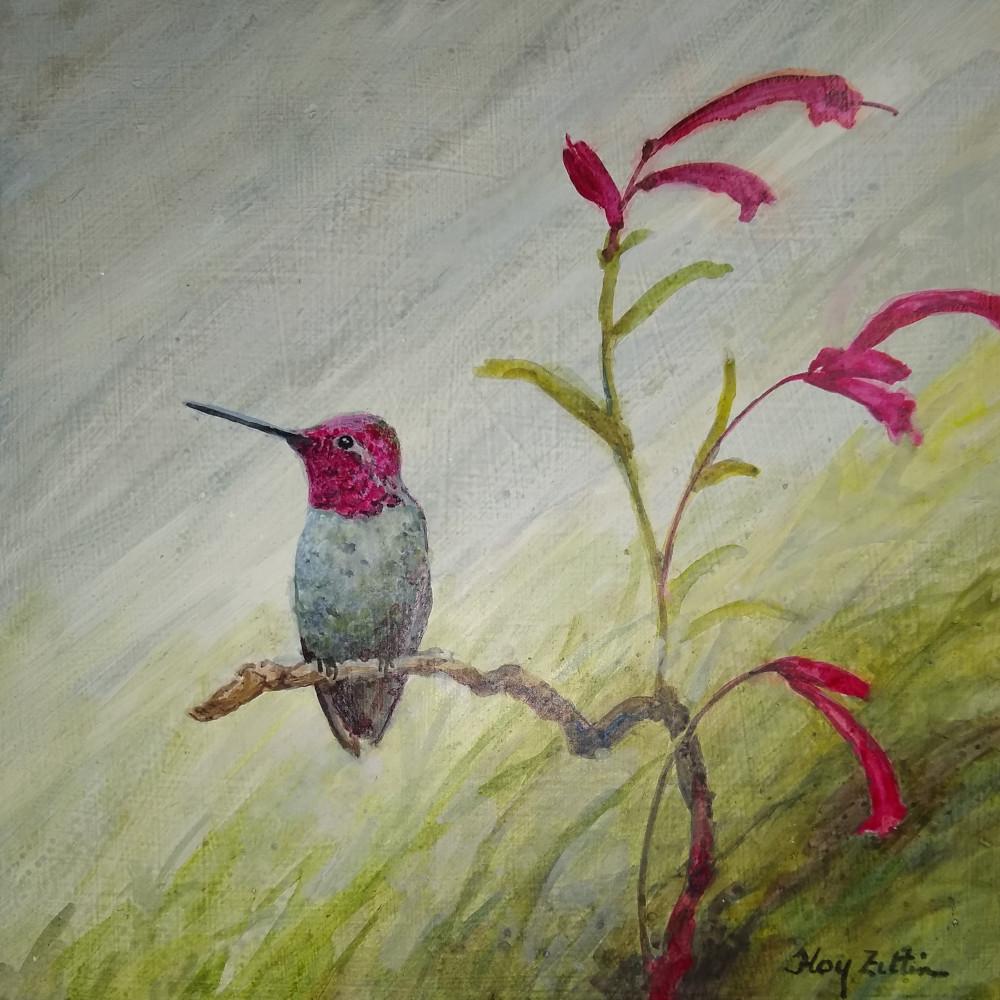 Anna's Hummingbird1000.jpg