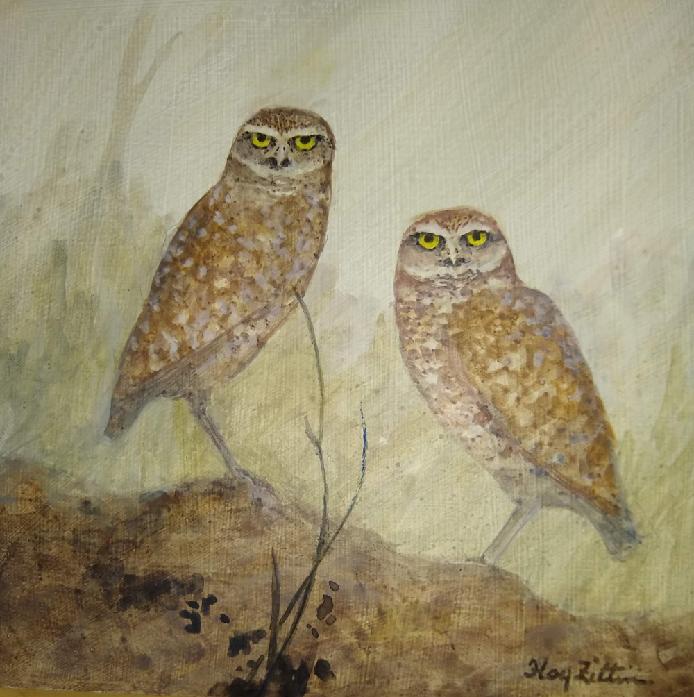 Burrowing Owls1000.jpg