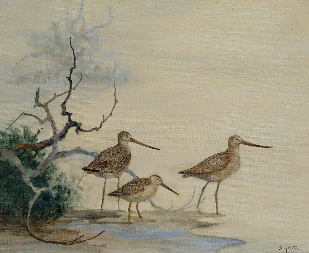 dowitcher and godwits1000.jpg
