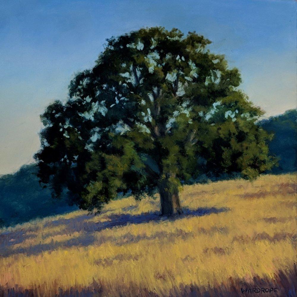 Foothill Oak 12 x 12.jpg