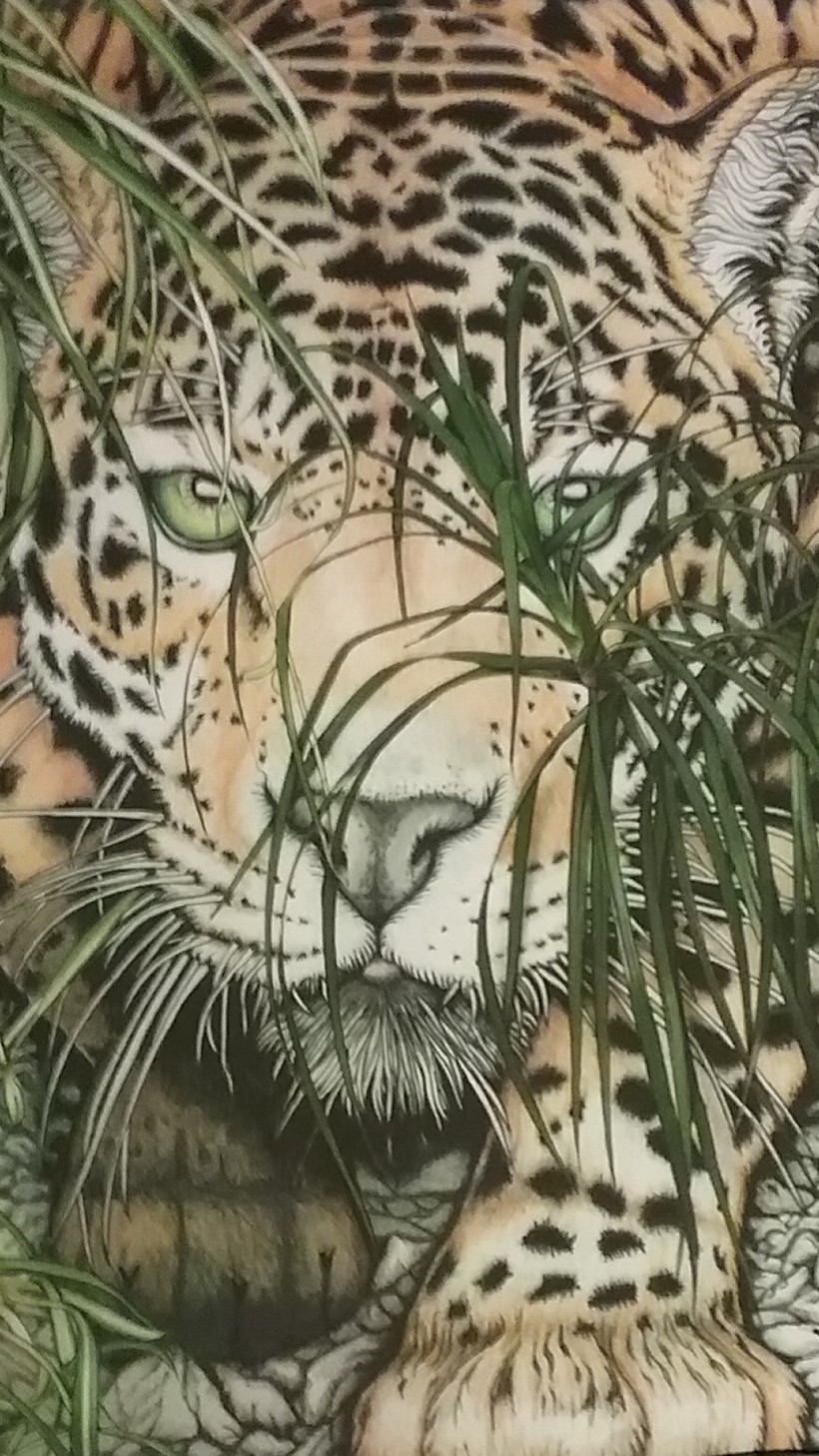 Crouching leopard.jpg