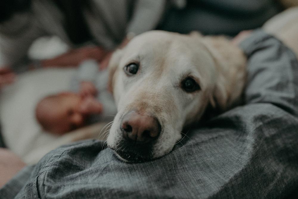 dog from Chaska MN lifestyle photoshoot