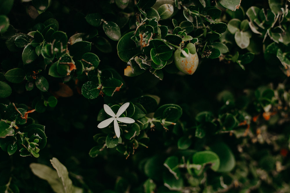 white_flower_maui_beach_photographer