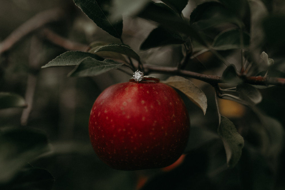 Engagement ring shot on an apple at Whistling Wells Farm in Hastings MN