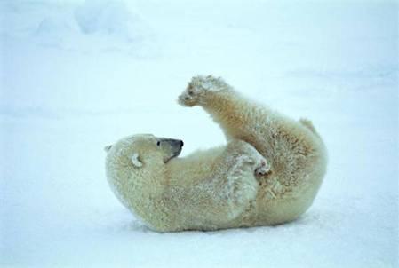 Polar_Bear_Yoga_by_Sabakudono