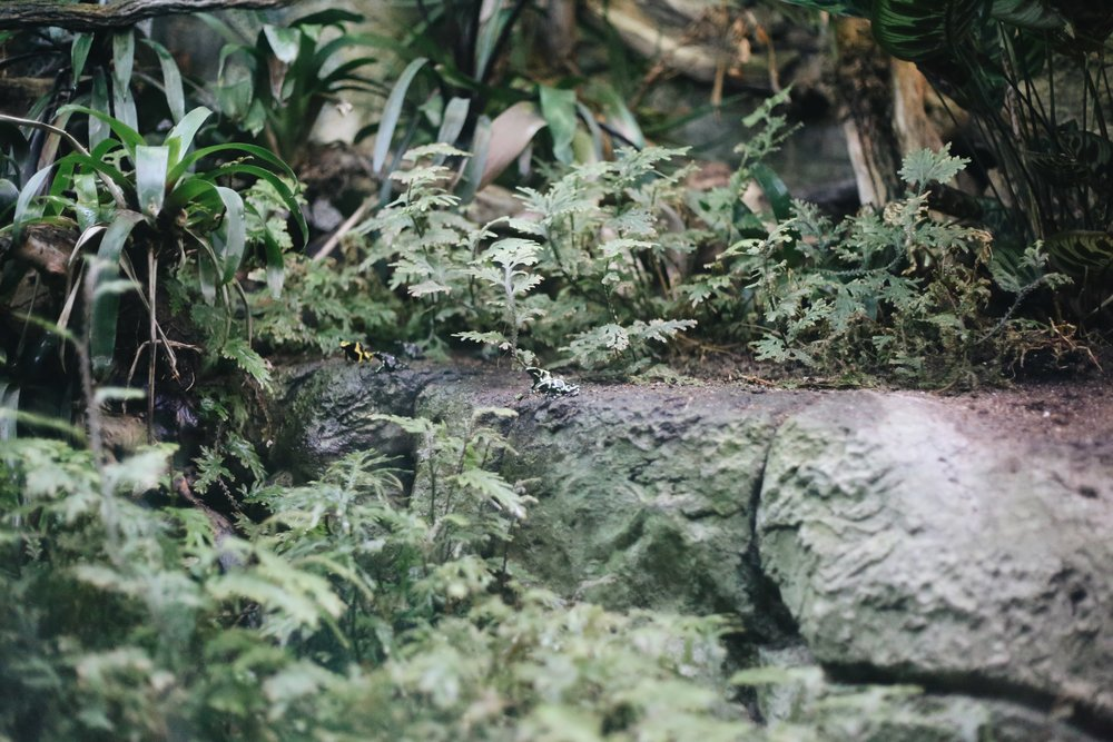 Can you see the speckled frogs in the middle?