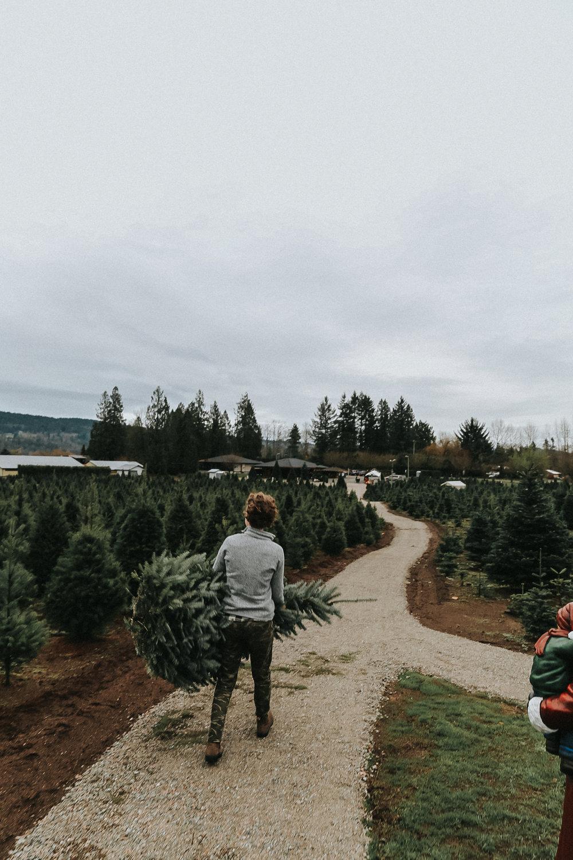 christmastree-21.jpg
