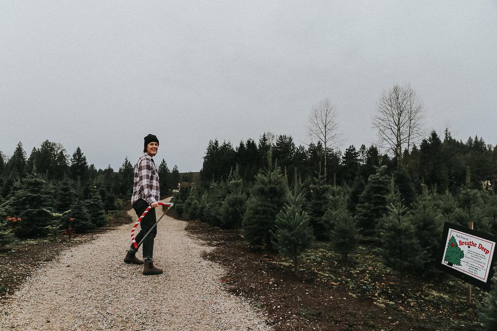 christmastree-6 copy.jpg