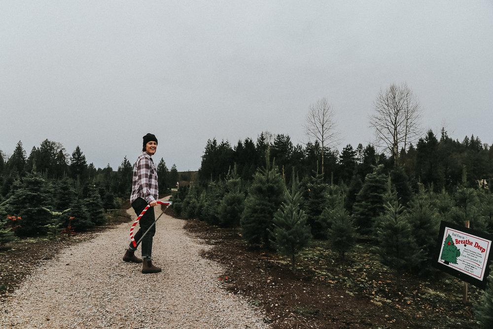 christmastree-6.jpg
