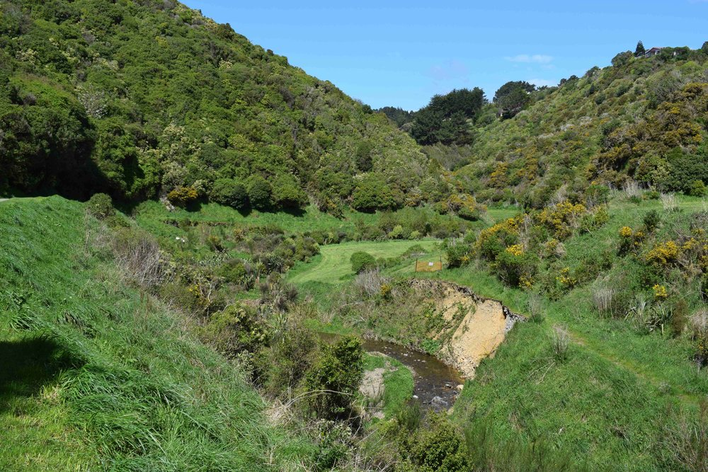 Looking further up the gully to the south west at previous years plantings along the stream.