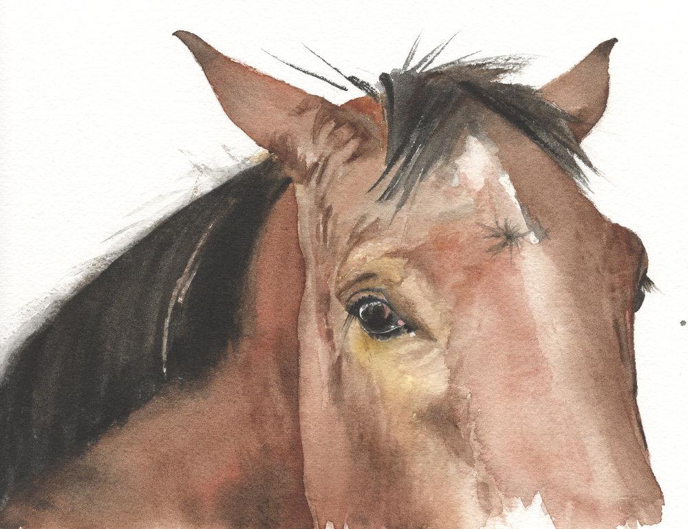 Nico's Horse