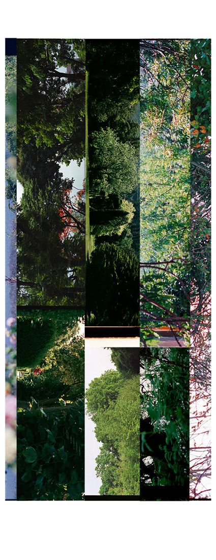 Garden Fragments 2008-2013. Archival Inkjet Print on Hahnemühle Photo Rag. 10x55cm. Edition of 5 + 2AP.