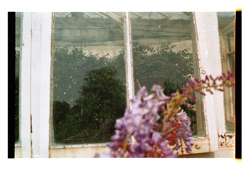 Up Against the Window [of some conservatory] 2008 [2010]. Archival Inkjet Print on Hahnemühle Photo Rag. 52x35cm. Edition of 5 + 2 Ap.