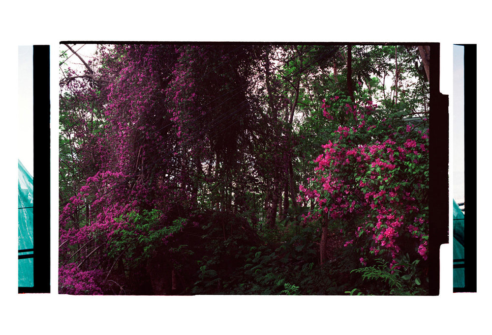 4.3 A Canopy of Colour, [The Draperies: [Floral Arrangement]. 2011. Archival Inkjet Print on Hahnemühle Photo Rag. 77 x 112cm. Edition of 5 + 2 AP.