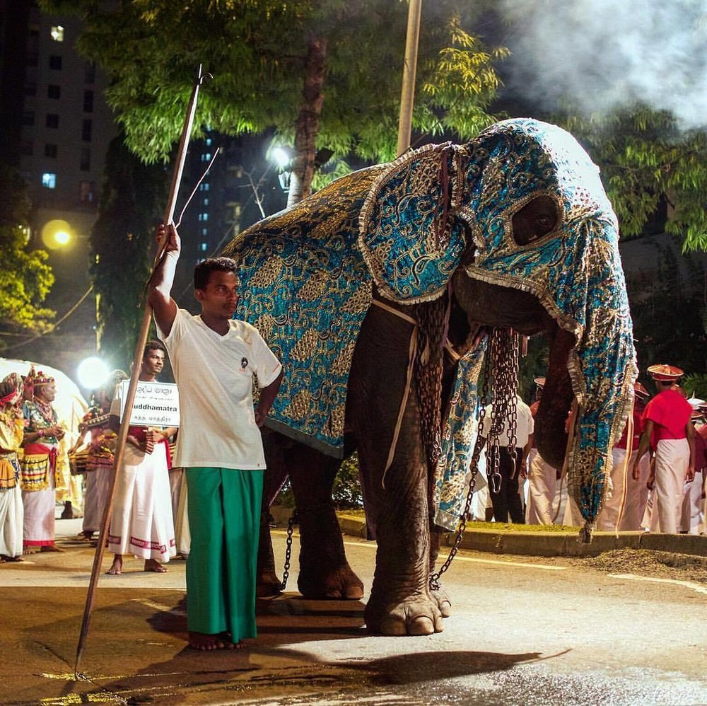 I've missed this photo from Pera Hera #perahera #Colombo #gangaramaya #temple #budhism #ceylon #elephant #sri_lanka #street_photography #color  (at Gangaramaya Temple)