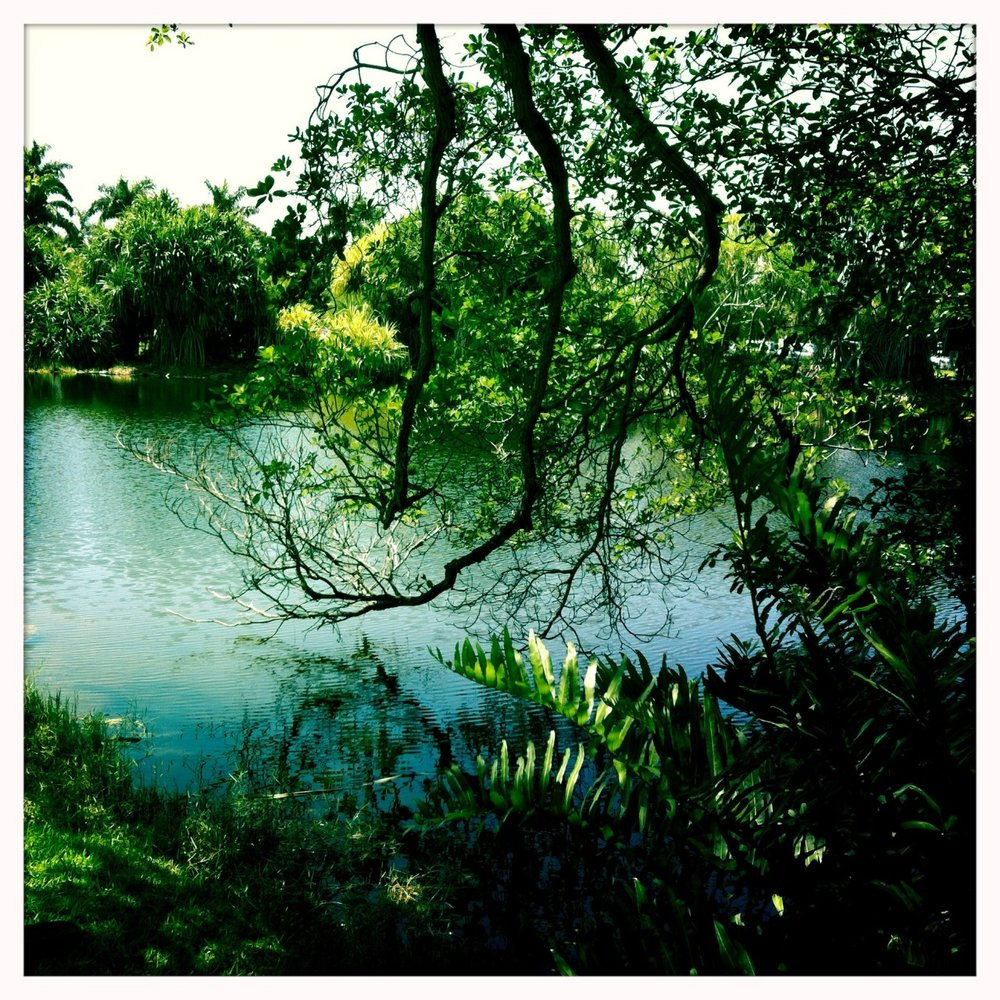 Jardim tropical em Miami. Com essa temperatura, poderia muito bem já ser em Manaus.