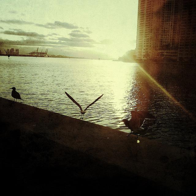Outro amanhecer em Miami.  on Flickr.
