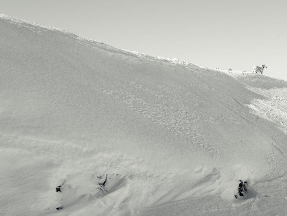 Nevegal   Belluno - Italy // January 2014