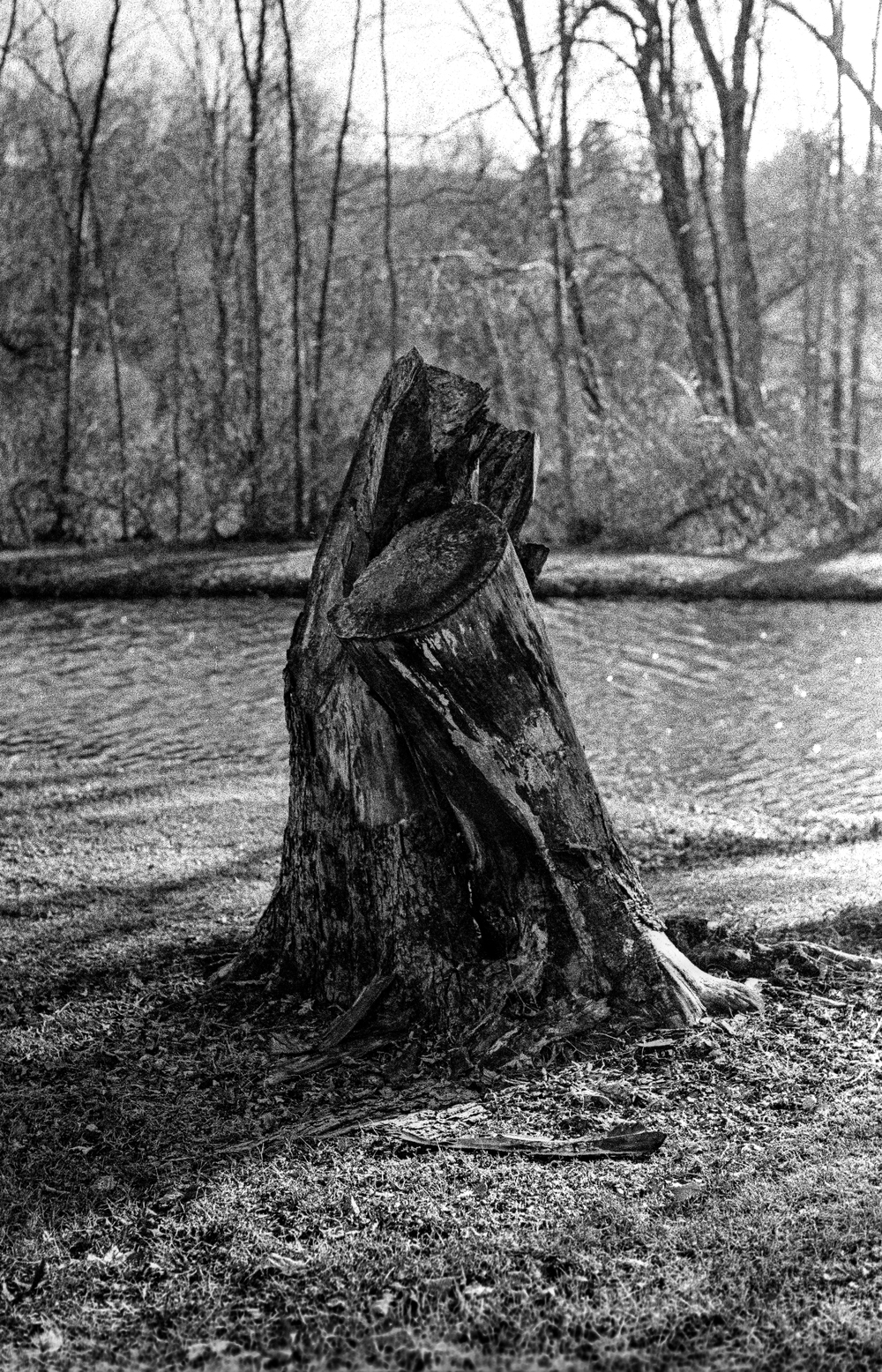 Stump - 2015