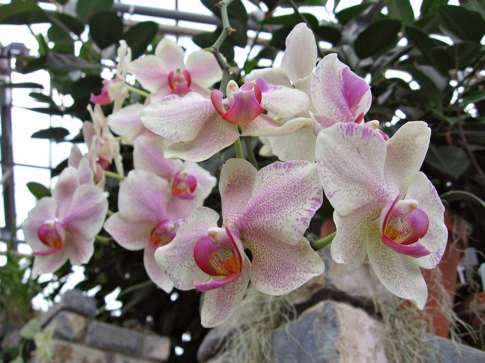Orchids_edit1.jpg