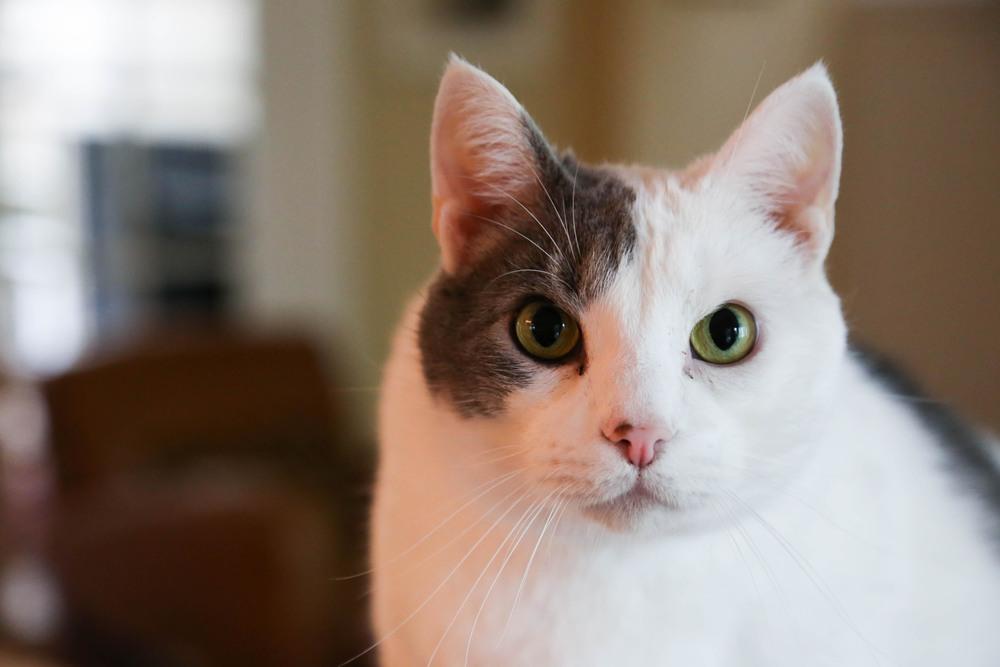 Cat Websize.jpg