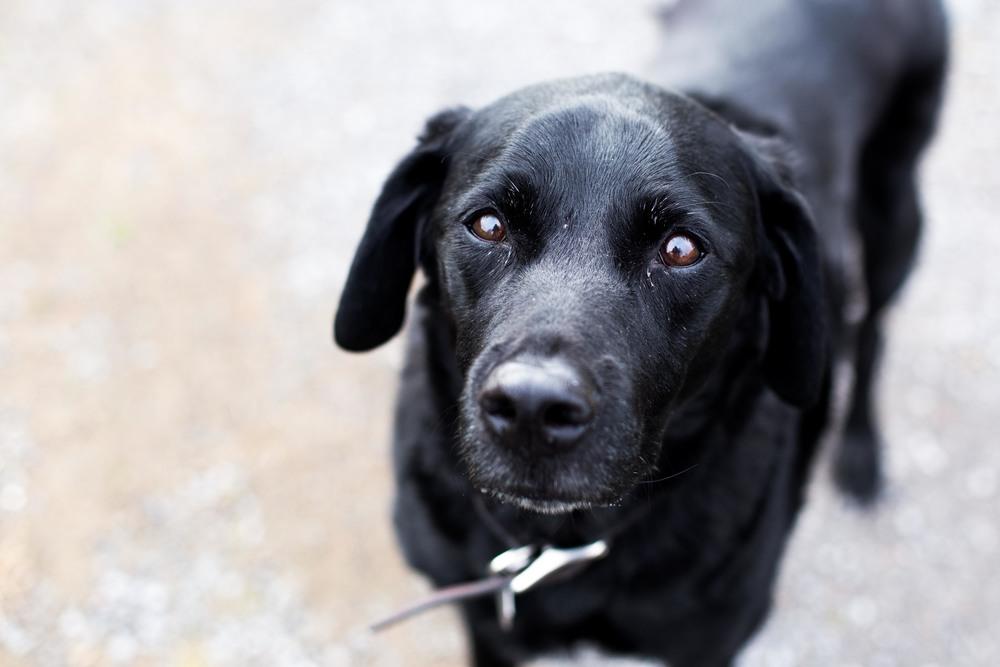 Dog Websize Duke.jpg