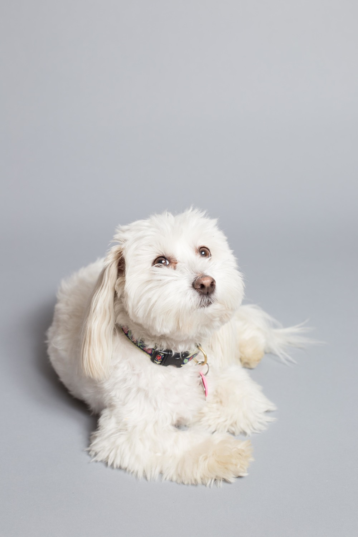 Dog Webssize Roo.jpg