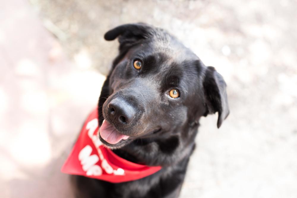 Rural Dog Rescue 7.24-31.jpg