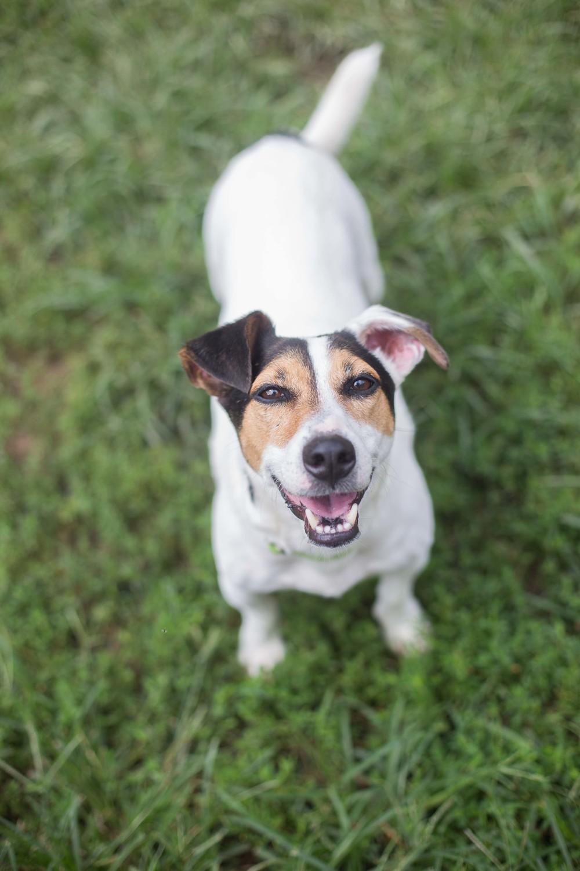 Homeward Trails Dogs-51.jpg