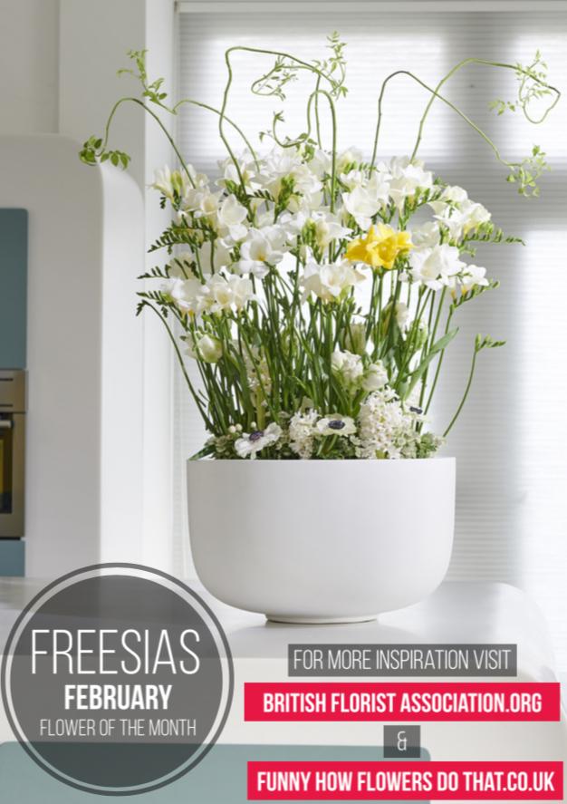 freesia1.jpg