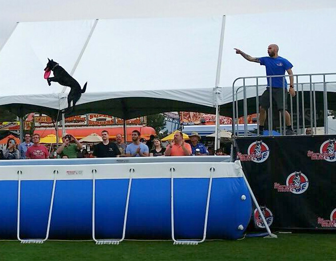 Chris with Poison Ivy at the West Valley Fair. This young Dutch Shepherd loves dock diving, and is already putting HUGE jumps.