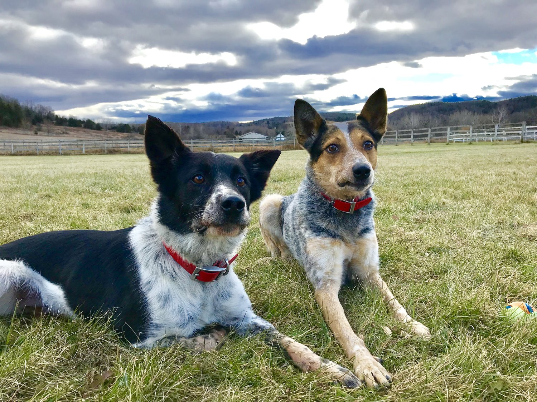 Hudson Valley Dog Farm — The Marvelous Mutts