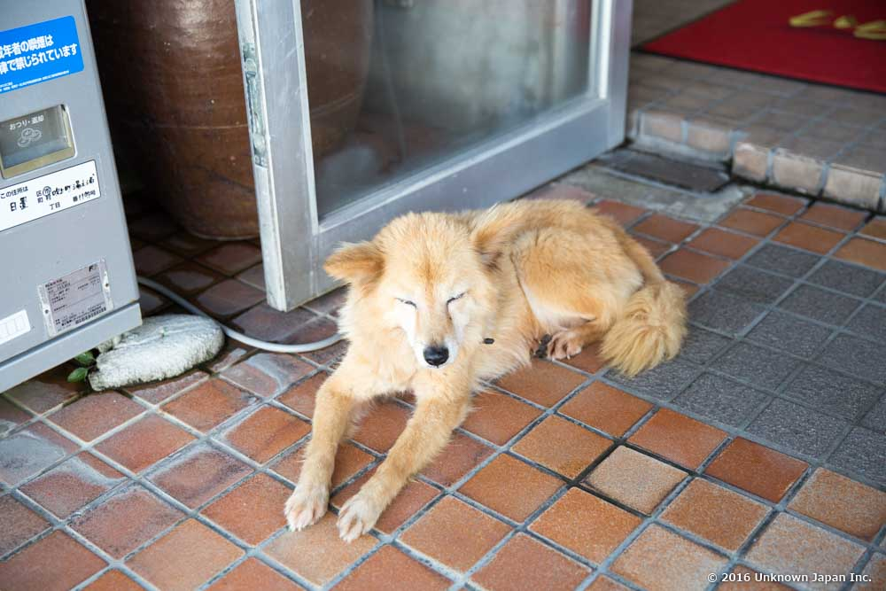 Shinyu Onsen Ryokan, dog