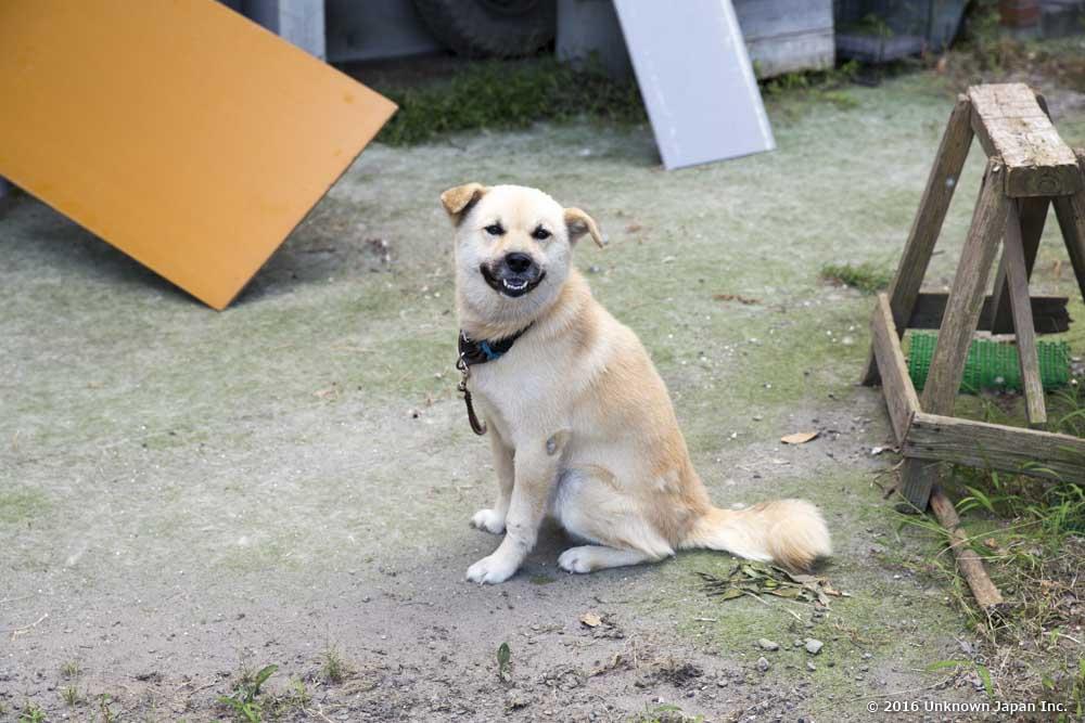 Nagamori Onsen, dog