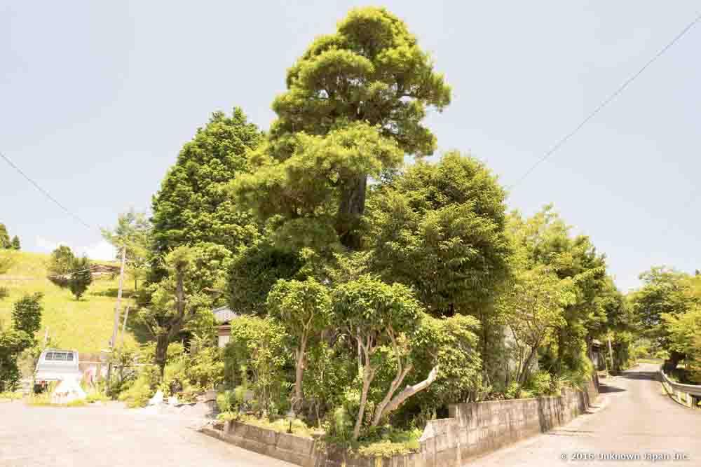 Maeda Onsen, tree