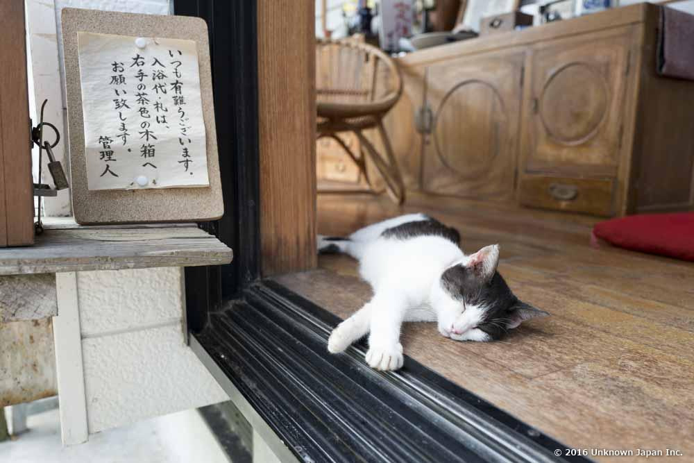 Muranoyu Onsen, cat