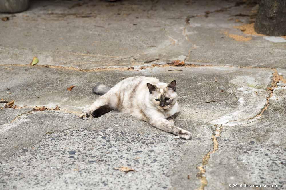 Kotobukiyu, cat